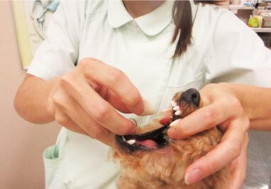 犬の投薬方法(錠剤)写真5
