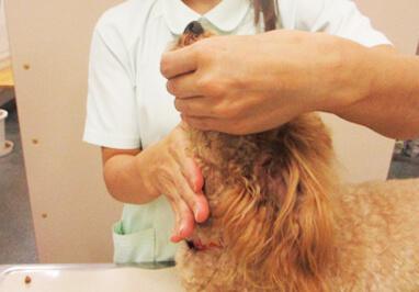 犬の投薬方法(錠剤)写真7