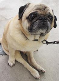 リハビリテーション犬写真1