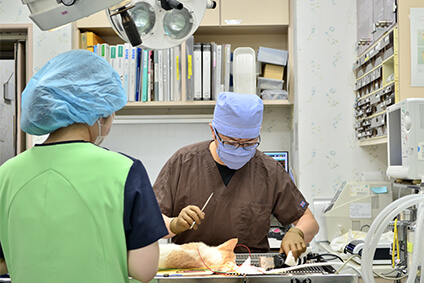 中郷どうぶつ病院の取組み