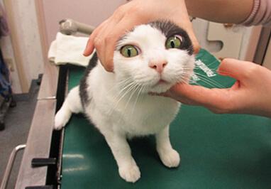 猫の投薬方法(錠剤)写真2