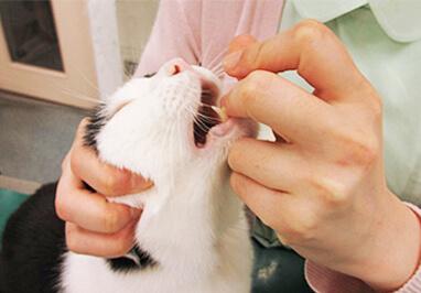 猫の投薬方法(錠剤)写真5