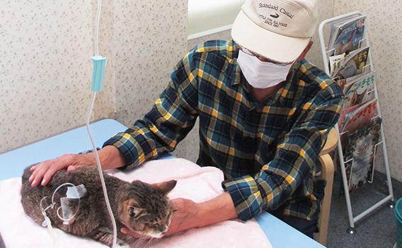 猫の慢性腎不全イメージ写真