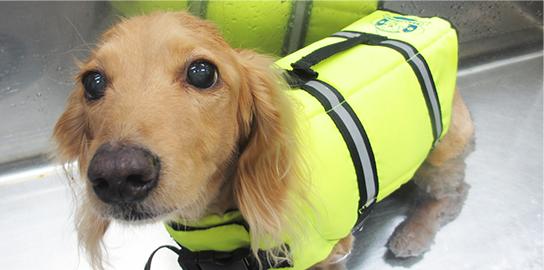 リハビリテーション犬写真2