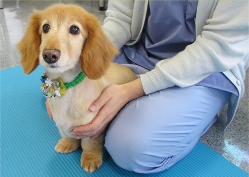 リハビリテーション犬写真4