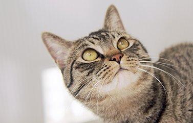 供血猫 ナナト